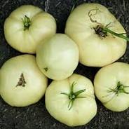 Tomato - Great White.jpg