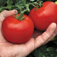 Tomato - Megabite.jpg