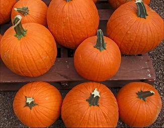 Halloween - Pumpkins.JPG