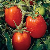Tomato - Amish Paste.jpg