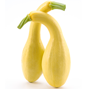 Squash - Yellow Crookneck.png