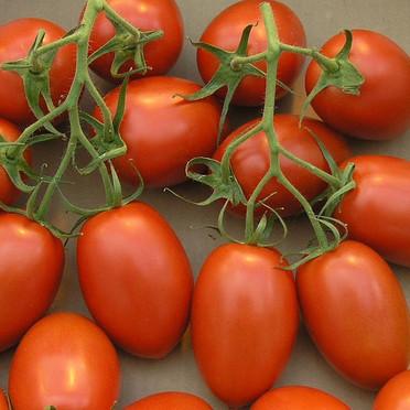 Tomato - Roma Plum.jpg