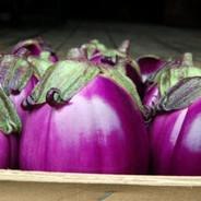 Eggplant - Beatrice