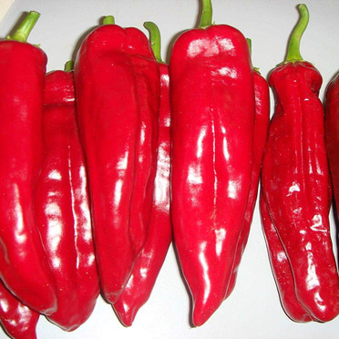 Pepper - Corno Di Toro.jpg