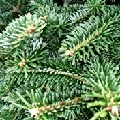 Fraser-Fir-Needles - 2018.jpg