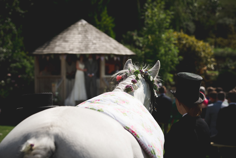 Horse looks on during outdoor wedding ceremony at Deer Park Hall
