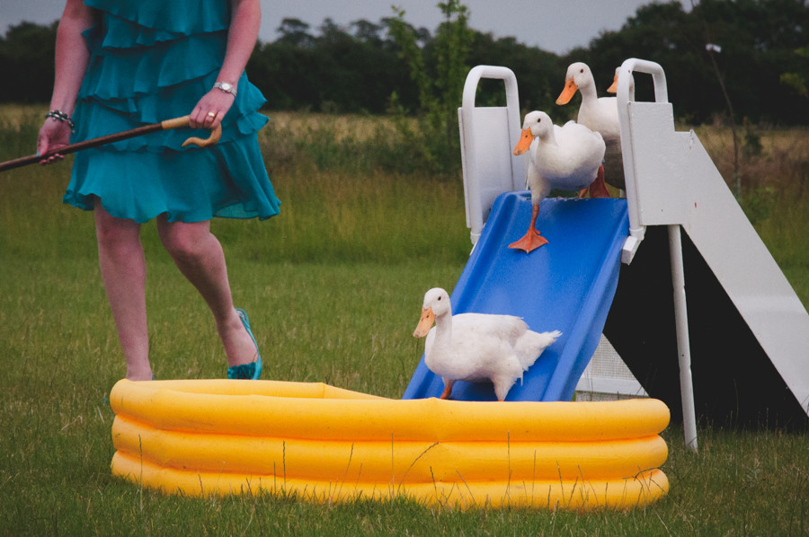 white ducks coming down a slide into a paddling pool