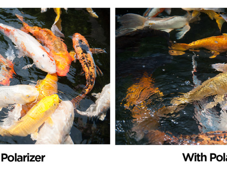 Polarizing Filters-you don't know what you are missing!