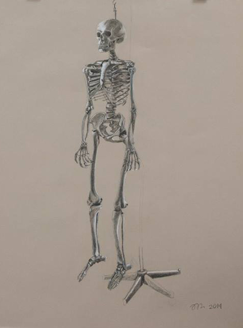 skeleton study assignment