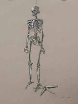 skeleton study assignment
