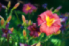 YTB_8106-Edit.jpg