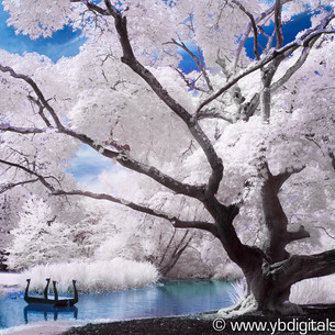 Introduction to Infrared Photography