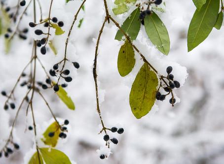 Perfect Snow Exposures