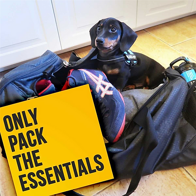 Traveling-with-Dog-2.png