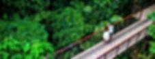 Nayara Gardens Transfers