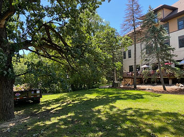 Tree Removal, Minneapolis, MN
