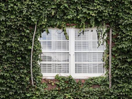How Often Should I Clean My Windows?
