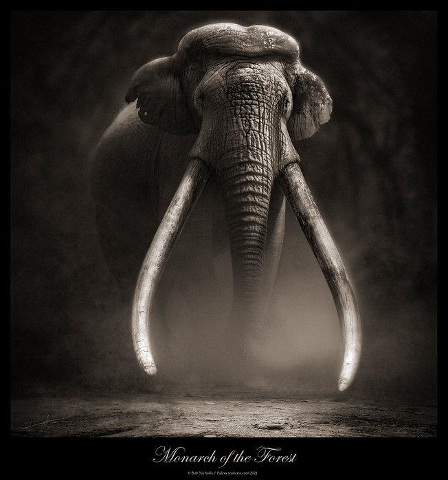 Edit Monarch of the Forest TIF ©Nicholls