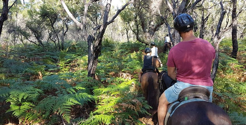 1.5hr Bush & Rainforest Ride