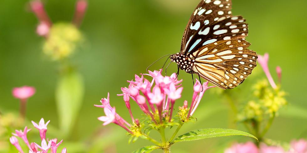 Spring Mindful Nature Walk