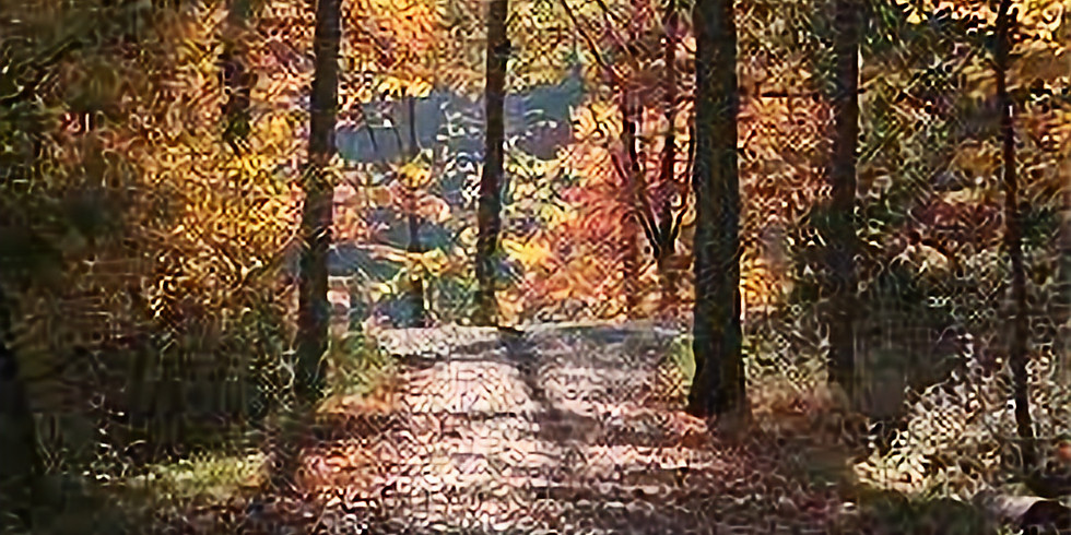 Mindful Nature Walk