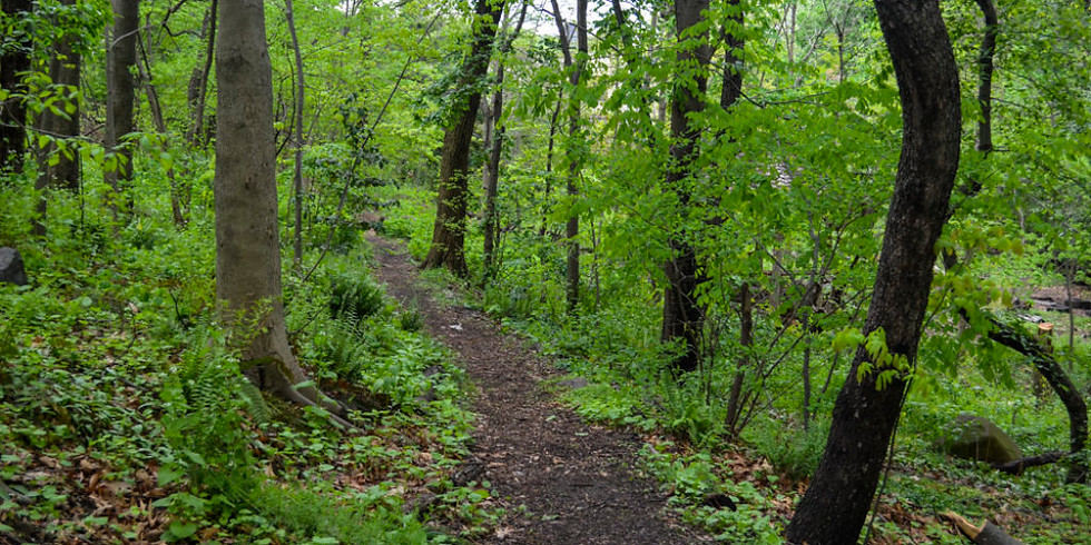 Forest Bathing: Connecting to Our Earth, Our Trees and Ourselves