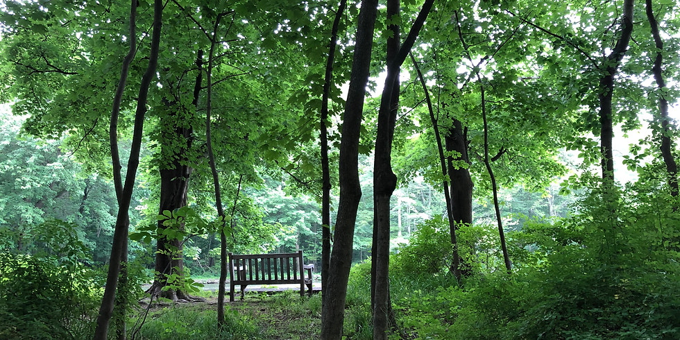 Mindfulness In Nature Series