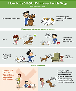 Dog obedience tips