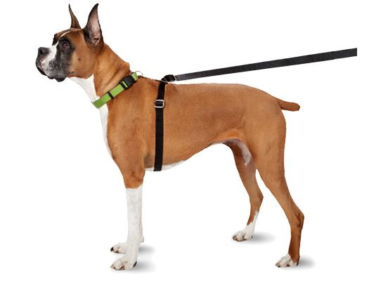 Walking the Dog - Which Harness is Best?