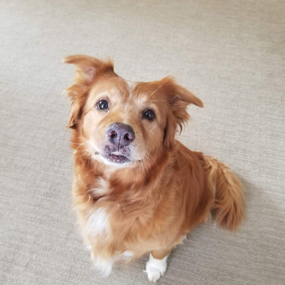 A happy senior dog