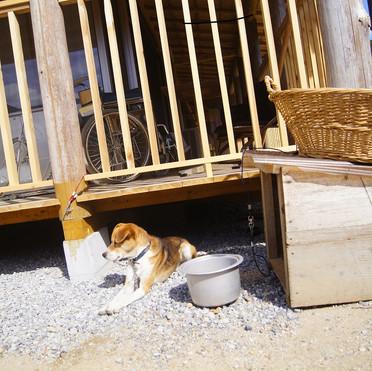 母屋の看板犬ペロタ。行儀はよくないけど愛想よしです
