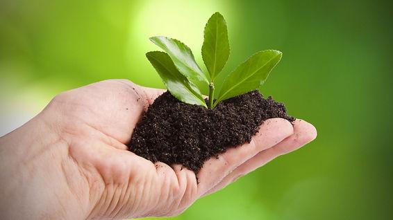 plante-écologie-1288x724.jpg