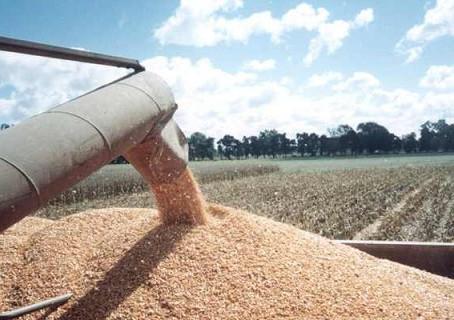 El aporte del agro en tiempos de crisis