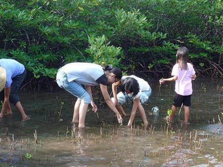 Mangrove rehabilitation with volunteer students.jpeg