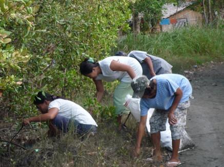 Mangrove clean-up.jpeg