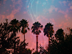 Palm Trees Dream