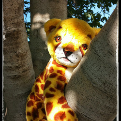 Animal in Tree
