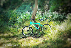 Bike on Tree