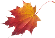 autumn_leaves_PNG3601.png