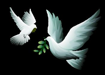 colombe-de-la-paix-png-4.png