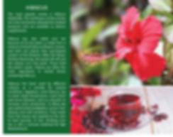 Comafrique-web-pages-8.jpg