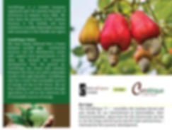 Comafrique-web-pages-2.jpg