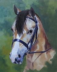 Dandy horse portrait