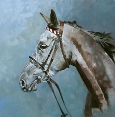 Portrait of arabian racehorse Zayane Maamora