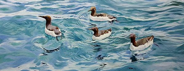 Guillemot Swirl, original wildlife art oil painting