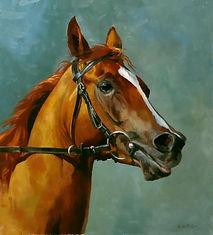 Portrait of arabian racehorse LB Armanii