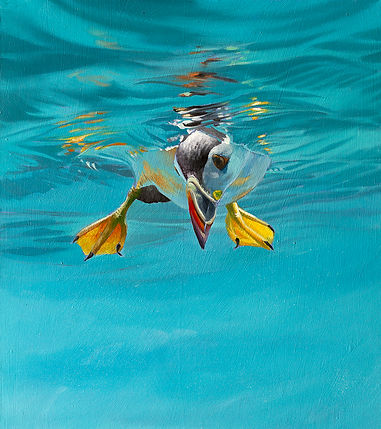 Peeking Puffin, original wildlife art oil painting