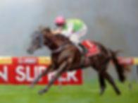 Racehorse Phelan Ready