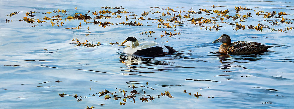 Evening Light, Eiders