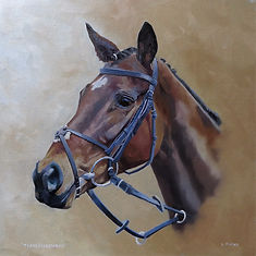 Portrait of racehorse Tearsofclewbay